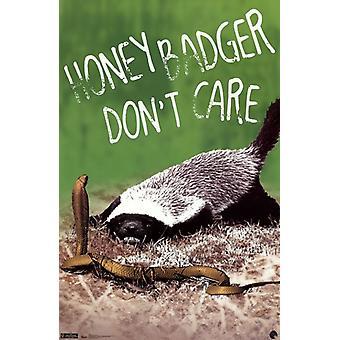 Tejón de la miel - cuidado Poster Print