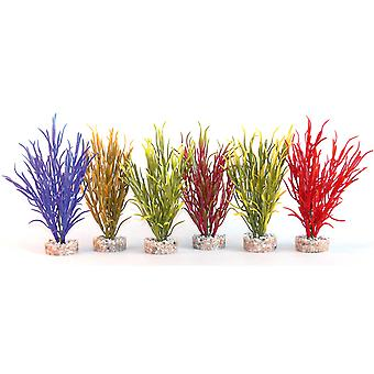 Sydeco Coloured Plants Sea Grass Baby 16cm (Pack of 12)