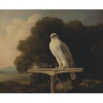 George Stubbs - Groenland Falcon Poster Print Giclee