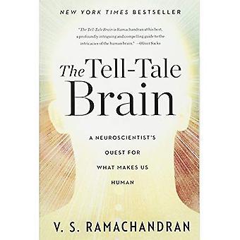 Das verräterische Gehirn: Ein Neurowissenschaftler Streben nach macht uns zu Menschen