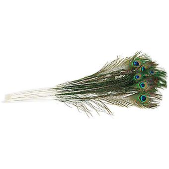 Peacock Eye Feathers 12 Pkg Natural B458 12