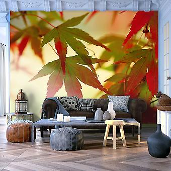 Wallpaper - Colourful leaves