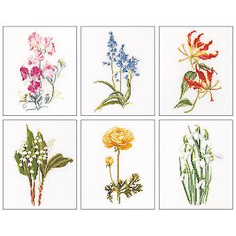 Floral Studies 6 On Aida Counted Cross Stitch Kit 6 3 4