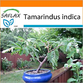 Saflax - Garden in the Bag - 4 seeds - Bonsai - Tamarind - Dattier d'Inde - Tamarindo / Dattero dell'India - Tamarindo - B - Tamarinde