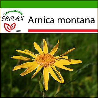 Saflax - 40 seeds - With soil - Mountain Arnica - Arnica des montagnes - Arnica  - Árnica - Echte Arnica