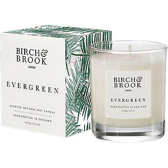 Birch & Brook Evergreen Candle