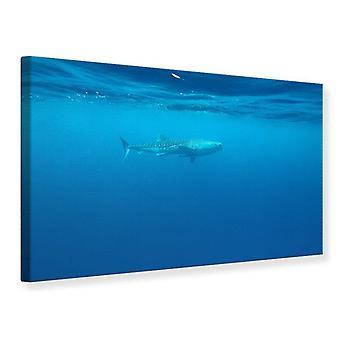 Impresión de lona el tiburón ballena