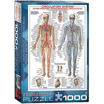 The Circulatory System 1000 piece jigsaw puzzle 680mm x 490mm  (pz)