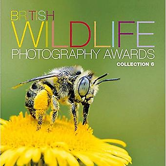 British Wildlife Photography Awards: Collection 6