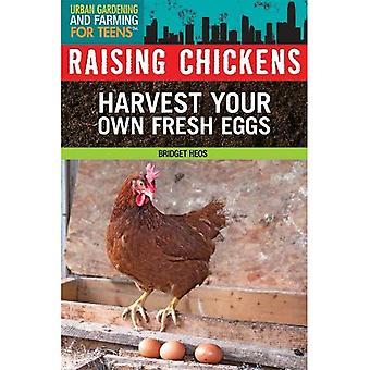 Raising Chickens (Urban Gardening and Farming for Teens)