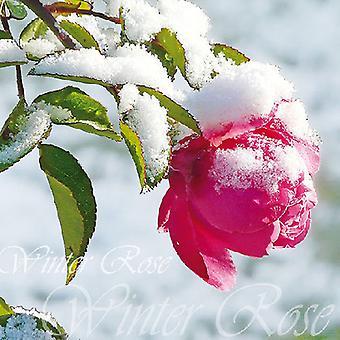 Ambiente vinter Rose servietter