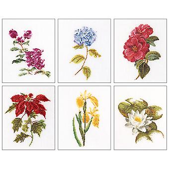Floral Studies 7 On Aida Counted Cross Stitch Kit 6 3 4