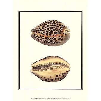 Leopard Cowry Shells Poster Print by George Shaw (10 x 13)
