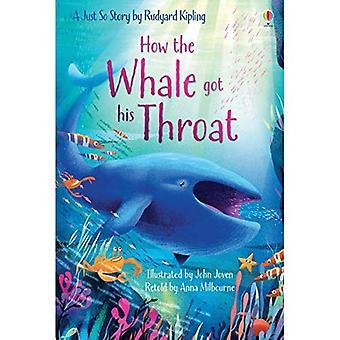Como a baleia tem a garganta (primeira leitura nível um)
