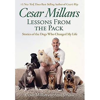 Clases de Cesar Millan del paquete: historias de los perros que cambiaron mi vida