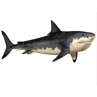 The Megalodon shark was an enormous predator in the Cenozoic Era of prehistoric Earth Poster Print