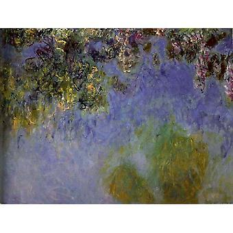 Glicine, Claude Monet, 50x40cm