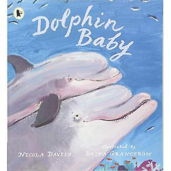 Dolphin Baby - Nature Storybooks (Paperback)