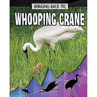 Bringing Back the Whooping Crane (Animals Back from the Brink)