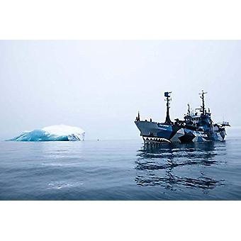 Sea Shepherd - 40 Years by Sea Shepherd - 40 Years - 9788857236292 Book