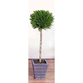 Artificial Cedar Single Ball Tree in Lead Look Planter