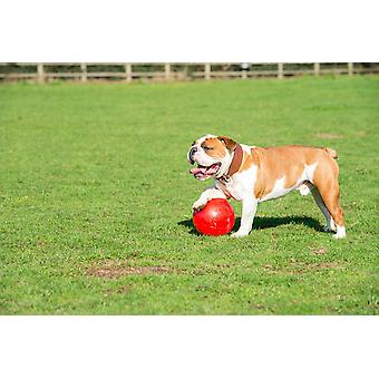 Company of Animals Boomer Ball, Dog Toy (4inch / 110mm) Red Colour