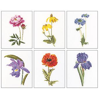 Floral Studies 5 On Aida Counted Cross Stitch Kit-6.75