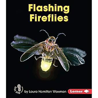 Flashing Fireflies (First Step Nonfiction - Backyard Critters)
