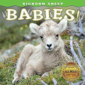 Bighorn Sheep Babies [Board� book]