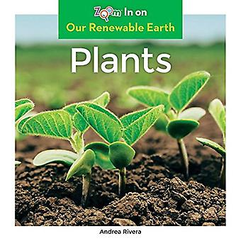 Plants (Our Renewable Earth)