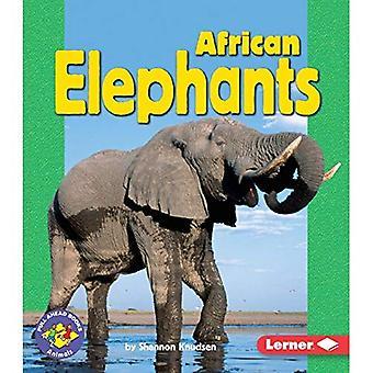 African Elephants (Pull Ahead Books)
