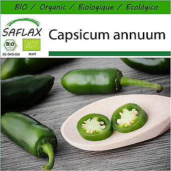 Saflax - 20 seeds - With soil - Organic - Hot Chili Pepper – Early Jalapeno - BIO - Piment  - Early jalapeno - BIO - Peperoncino - Early Jalapeno - Ecológico - Chile - Jalapeño Temprano - Chili - Early Jalapeno