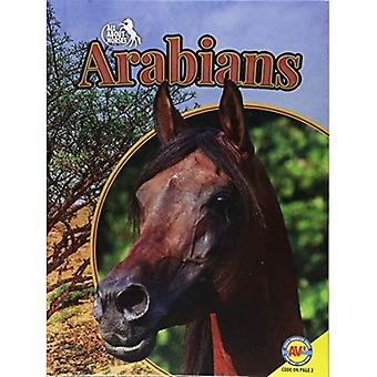 Arabians (All about Horses)