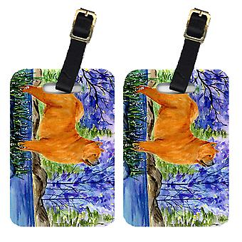 Carolines Treasures  SS8600BT Pair of 2 Chow Chow Luggage Tags