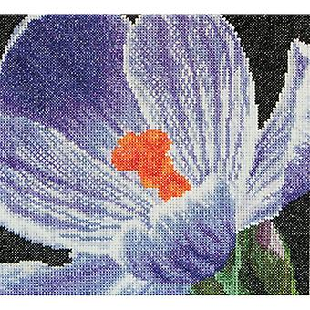 Crocus On Aida Counted Cross Stitch Kit-5.75
