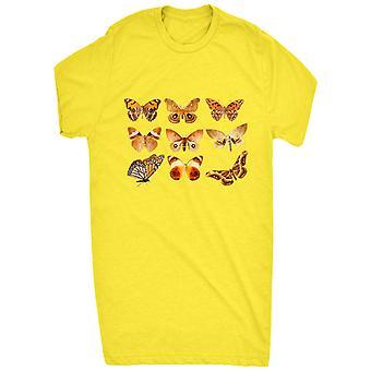 Renommierten sortierten Schmetterlingssammlung 2