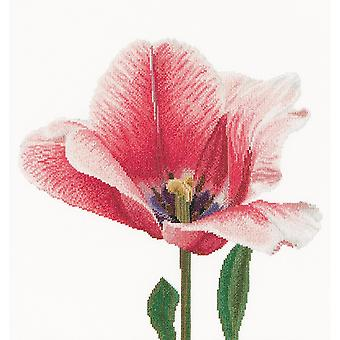 Pink Darwin Hybrid Tulip On Aida Counted Cross Stitch Kit-13.5