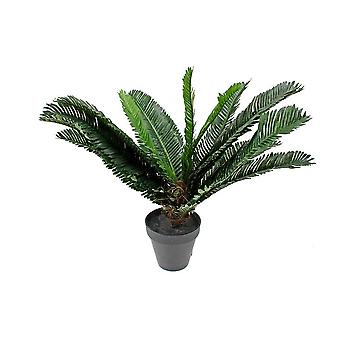 Potted 40 Cm Cycad