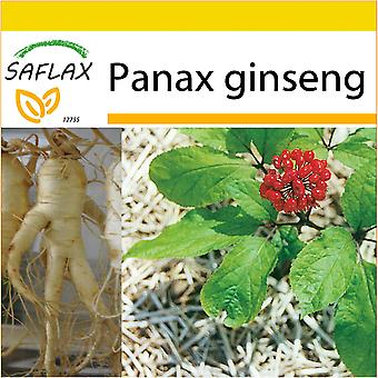 Saflax - Potting Set - 10 seeds - Chinese Ginseng - Ginseng - Ginseng - Ginseng - Ginseng
