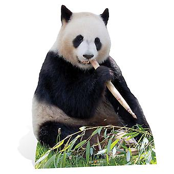 Giant Panda Lifesize Cardboard Cutout / Standee / Stand up / Standee