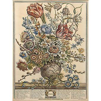 Roberty Furber - Twelve Months of Flowers March Poster Print Giclee