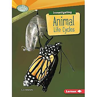 Investigating Animal Life Cycles (Searchlight Books What Are Earth's Cycles?)