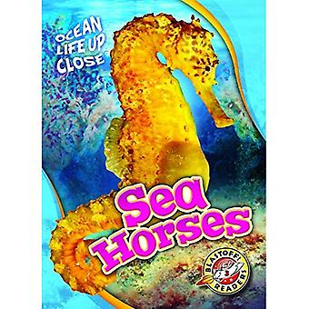 Sea Horses (Ocean Life Up Close)