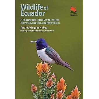 La faune de l'Équateur: un Guide de champ photographique pour oiseaux, mammifères, Reptiles et amphibiens - Princeton University Press (WILDGuides)