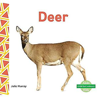Deer (Everyday Animals)
