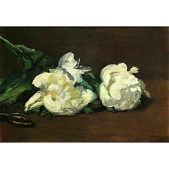 Branch of White Peonies and Shears,Edouard Manet,31x46.5cm