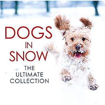Dogs in Snow: The Ultimate Collection (Photographs)
