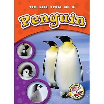 The Life Cycle of a Penguin