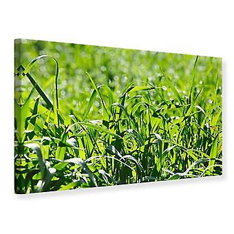 Canvas Print Sunny Grass
