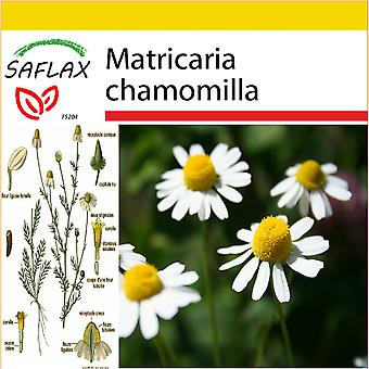 Saflax - Potting Set - 300 seeds - Mayweed - Camomille sauvage - Camomilla - Manzanilla común - Echte Kamille